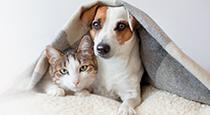 Hayat, hayvan dostlarımızla çok daha güzel!